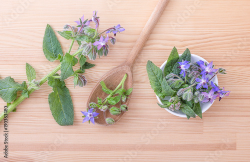 starflower / top view of Bowl and wooden spoon with Borage