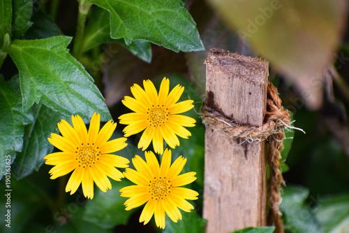 flower-photo-zrobione-przez-nkon-d5300