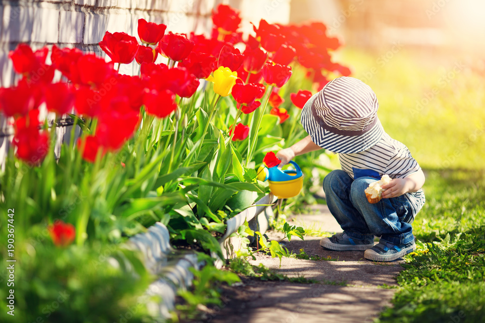 Fototapety, obrazy: Little child walking near tulips on the flower bed in beautiful spring day