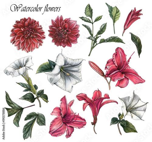 Cuadros en Lienzo Flowers set of watercolor dahlias, lilies, datura flowers and leaves