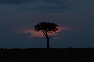 a single tree against a sunset in the Maasai Mara, Kenya