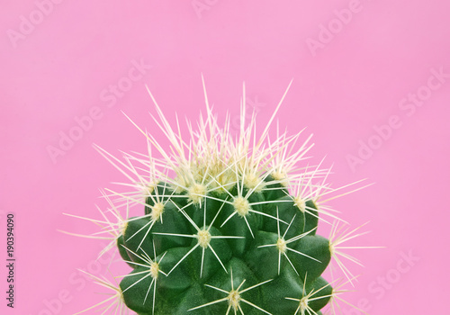 Tuinposter Pop Art Tropical fashion cactus on pink paper background. Trendy minimal pop art style and colors.