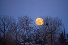 Full Moon Rising Over Trees In...