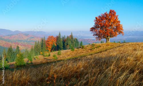 kolorowy-jesien-krajobraz-w-gorach-z-osamotnionym-drzewem