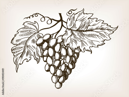 Grapes with leaves engraving vector illustration © Alexander Pokusay