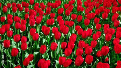Keuken foto achterwand Rood traf. fresh spring flowers. Spring Background. Spring. Background