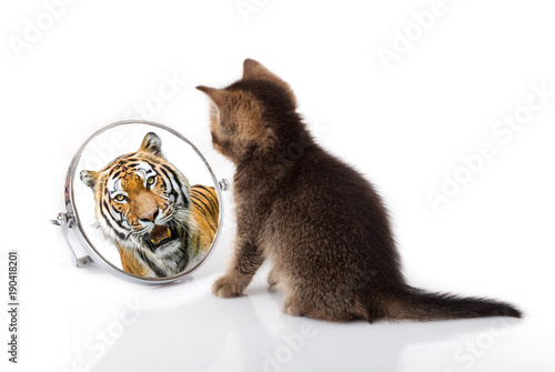 In de dag Tijger kitten with mirror on white background. kitten looks in a mirror reflection of a tiger