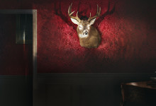 Trophée  Cerf Animal Sauvage Empaillé