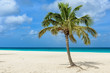 Palm tree alone on the white sand of the Eagle Beach in Aruba. Tropical landscape.