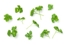 Leaves Of Parsley Isolated On ...