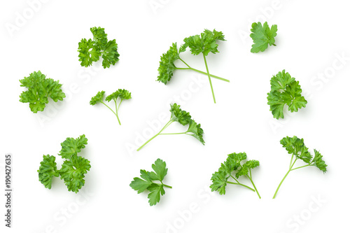 Fotografie, Obraz Leaves of Parsley Isolated on White Background