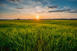 Spring Sun Shining Over Agricultural Landscape Of Green Wheat Field