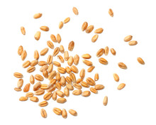 Wheat Grains Isolated On White...