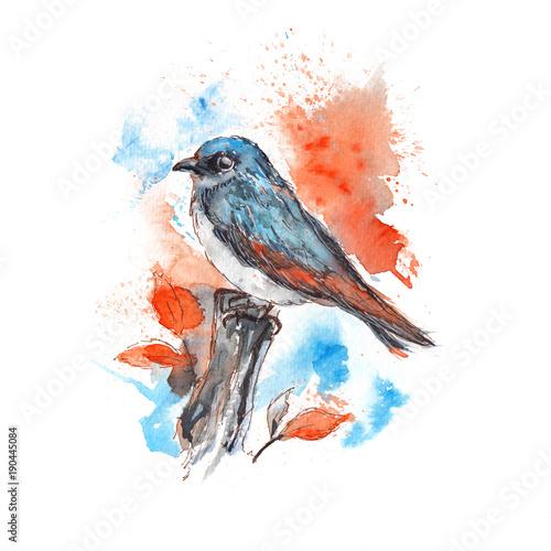 maly-ptak-na-galezi-rysunek-czerwono-niebieski-akwarela