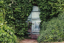 A Vintage Door With Is Ivy Cov...