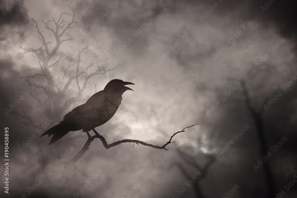 Crow or raven resting on a barren tree branch.