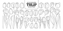 Set Of Isolated Tulip In 30 St...