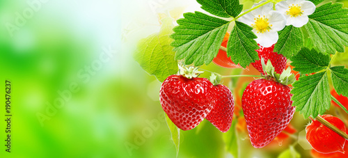 Staande foto Vruchten fresh strawberries