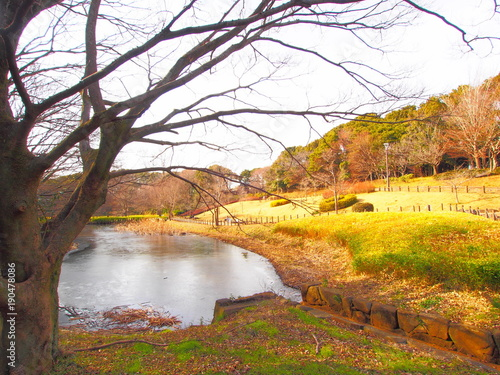 Deurstickers Zwavel geel The scenery of the park, January, Chiba, Japan