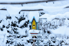 Little Bird House In The Snow