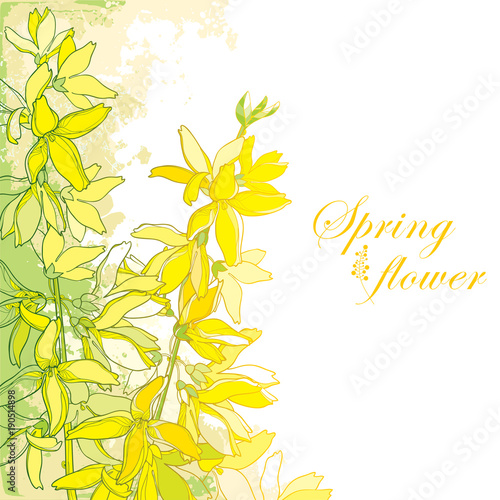 Fotografia, Obraz Vector bunch with outline Forsythia flower, branch, leaves in yellow isolated on textured background in pastel colors