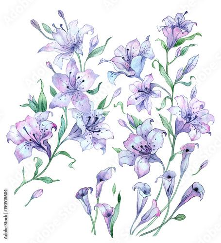 Kwiaty w akwarela. Vintage skład lilii na białym tle.
