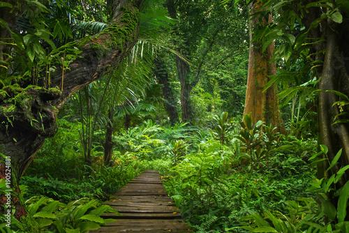 Poster de jardin Bambou Asian rainforest jungle