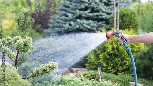 Obraz Hand garden hose with water spray, watering flowers, close-up, water splashes, landscape design, alpine slide - fototapety do salonu