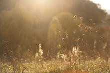 Wild Meadow Flowers In The Sun...