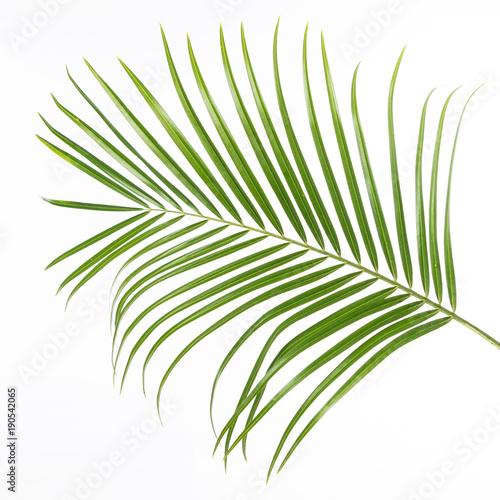 grünes Farnblatt isoliert vor weißem Hintergrund