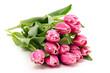 Zweifarbige Tulpen