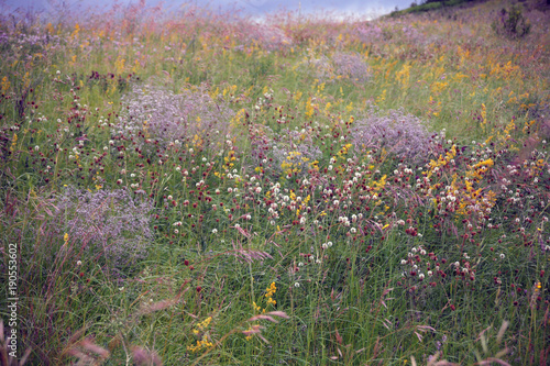 Fototapeta поле луговых цветов obraz na płótnie