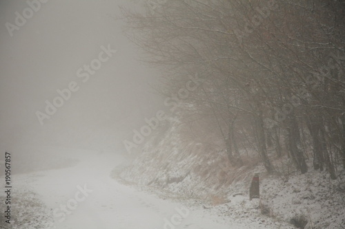 Fotografie, Obraz  foresta del casentino in inverno