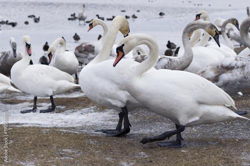 Fotografie, Obraz  Fabulous wild birds