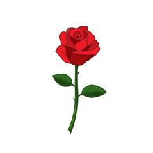 Flower Of Red Rose With Stem, ...