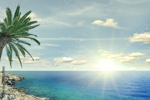 Foto op Canvas Strand Beach palm and sea on a sunny day.