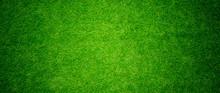 Grass Field Background. Green Grass. Green Background