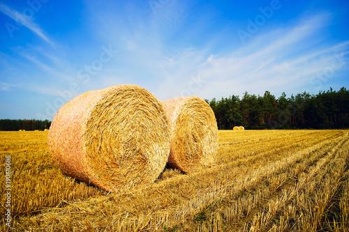 round-sloma-bele-na-polu-letni-krajobraz