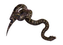 3D Rendering Burmese Python On...