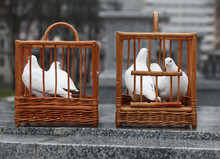 White Doves In A Wooden Cage