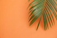 Tropical Palm Tree Leaf On A S...