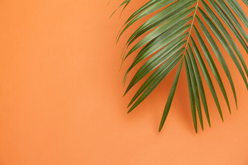 Tropical palm tree leaf on a summer orange background