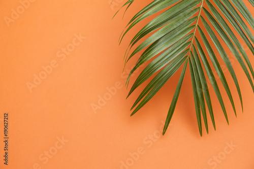 Tropical palm tree leaf on a summer orange background