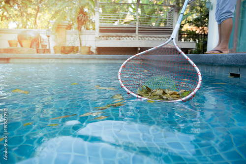 Woman cleaning swimming pool of fallen leaves with net ...