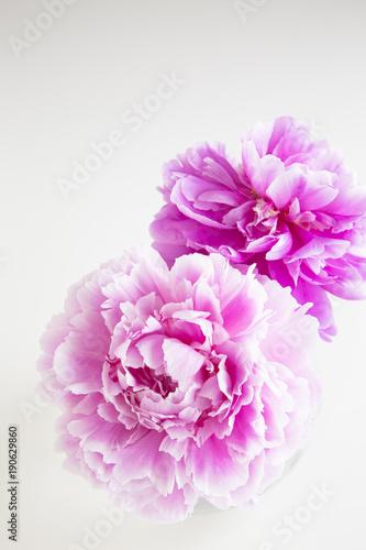 chinski-piwonia-kwiat