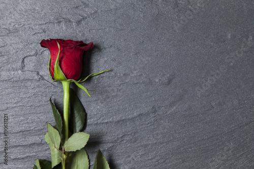 Fototapeta Valentine's day red rose on a slate background with copy space obraz na płótnie