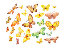 Many Butterflies On White Background. Watercolor Illustration