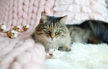 Cat Lying On Bed Giant Plaid Blanket Fur Bedroom, Winter Vibes Cosiness Relax