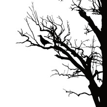 Realistic Vector Silhouette Of Sitting Raven On Dry Tree Branch