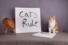 Two Cats With Cats Rule Sign